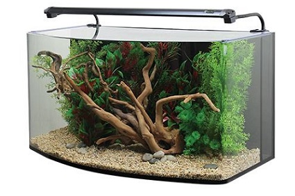 Bow Front Aquariums