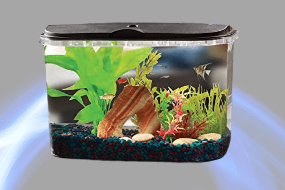 https://www.petco.com/shop/en/petcostore/category/fish/fish-aquariums-kits/freestanding-large-fish-tanks/aquariums-20-to-39-gallons