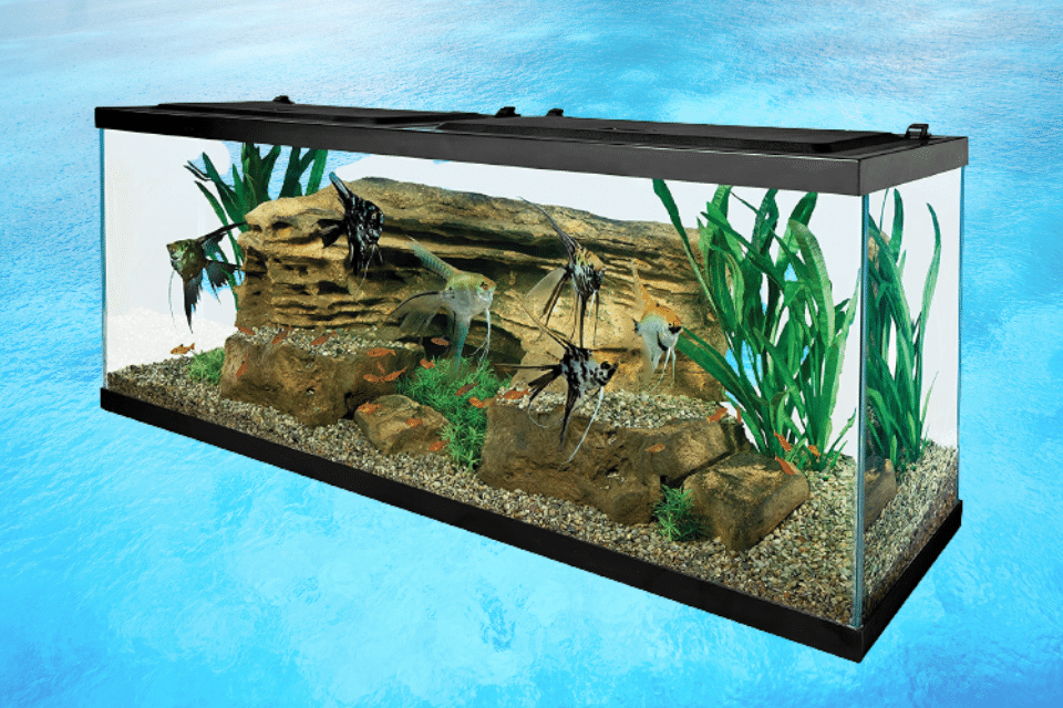 affordable 50 gallon fish tank