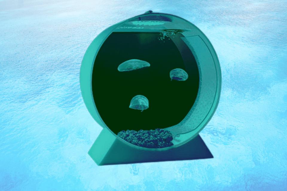pet jellyfish tank